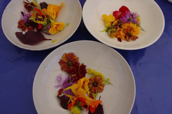 Blüten und Blätter zur Farbherstellung