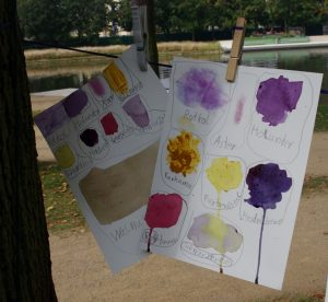 Dokumentation Pflanzenfarbe
